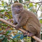 Madagascar rainforests and RN7 Route - includes Ranomafana National Park with Bamboo lemur