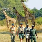 Walking Safari Tour Kruger National Park South Africa Tours Safaris