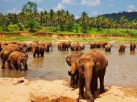 Holidays Sri Lanka Grand Tour Safari Yala National Park