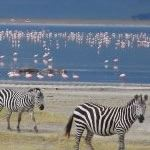 Photo Safari to Serengeti and Zanzibar Ngorongoro Crater Tanzania