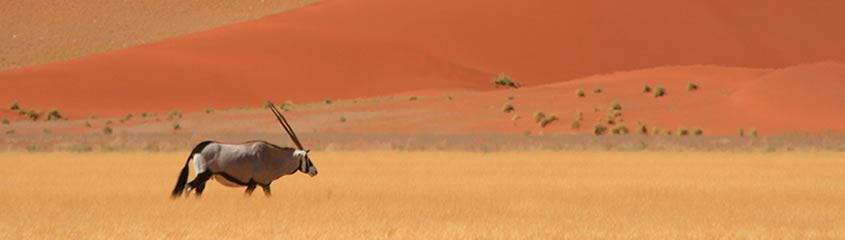 Namibia Safari Holidays Namibia Holidays Namib Tours Vacations Namibia