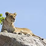Photo Tanzania Escorted Tour Serengeti Ngorongoro Crater Tarangire Lake Manyara