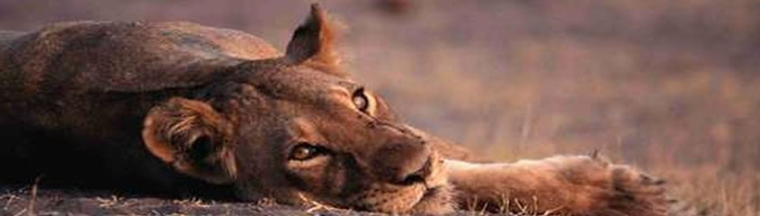 Kruger National Park Safari Holidays Kruger Park Safari South Africa