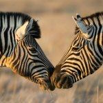 Photo Namibia Tour Etosha Caprivi Escorted Safari Tours Botswana Vic Falls