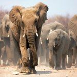 Etosha National Park Namibia Private Tour Safari Guide Holiday Vacation