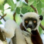 Luxury Holiday Madagascar Anjajavy Dancing Lemur Tsingy Mauritius Beach