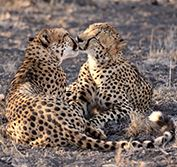 Beach Safari Zululand South Africa Big Five Thonga Beach Honeymoon