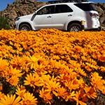 Holidays Tours Namaqualand Wildflowers South Africa Cape Town Whales