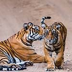 Disabled Holiday India Photo Tiger Safari Wheelchair Golden Triangle