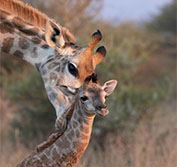 Kruger National Park Safari Vacation South Africa Holiday Cape Town