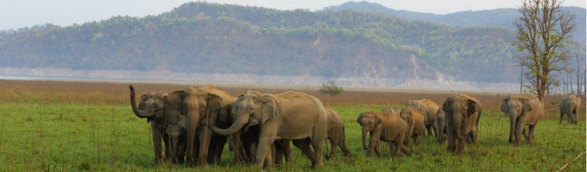 Himalayan Holidays Shimla Amritsar Jim Corbett Safari Elephants India