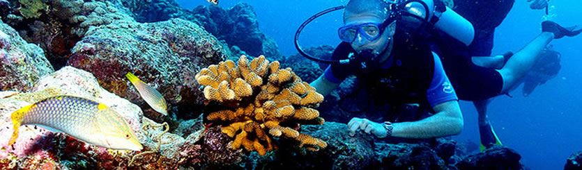 Diving Holidays Indian Ocean