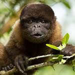 Ecuador Wildlife Holiday: Quito Cloud Forest Amazon Galapagos Cruise
