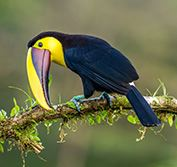 Self Drive Costa Rica Birding Holiday Central Valley Quetzal Osa Peninsula