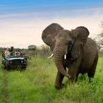Luxury Beach Safari South Africa Phinda Oyster Box Big Five Zululand