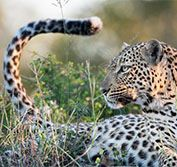 South Africa Luxury Train Rovos Rail Kruger Durban Garden Cape Town