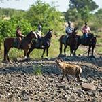 Holidays Ride Horses Wildlife Big 5 Waterberg Mountains Limpopo Valley