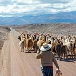Bolivia and Peru Holidays Salt Flats Paz Lake Titicaca Machu Picchu