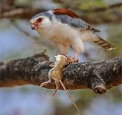 Kenya Birding Photo Safari Birds Wildlife Africa Photographic Guide