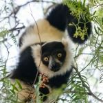 Holidays to Masoala National Park in Madagascar