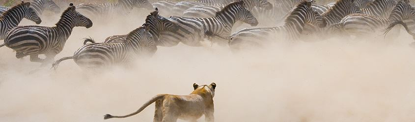 Tanzania Safari and Zanzibar Holidays All Inclusive Serengeti Tours