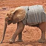 Sheldrick Elephant Orphanage Kenya Wildlife Trust Ithumba Camp Tsavo