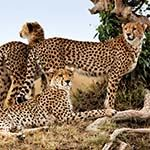 Photo Kenya Private Tour Amboseli Masai Mara Tsavo Safari Vacations