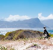 Birding Holiday South Africa Cape Town Bird Guides Kirstenbosch Vacation