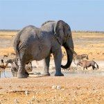 Namibia Escorted Tours