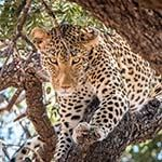 Golf Holiday South Africa Leopard Creek Kruger National Park Cape Town
