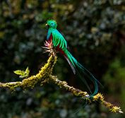 Tailor Made Birding Holiday Costa Rica Arenal Sarapiqui Quetzal Antonio