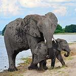 Victoria Falls Cape Town Holiday Safari Chobe Botswana Luxury Honeymoon