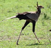 Birding Holiday Tanzania Kilimanjaro Ngorongoro Serengeti Bird Watching