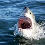 Shark Diving South Africa Adventure Holidays Cape Town Garden Route