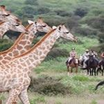 Horse Riding Holidays South Africa Durban beach Pongola Zululand Safari