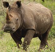 South Africa Tour Kruger Park Photo Durban Garden Route Cape Town