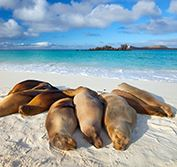 Holiday Wildlife Costa Rica Galapagos Islands Cruise Quito Vacation