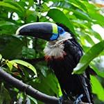 Colombia Birding Wildlife Holidays Tours Vacations