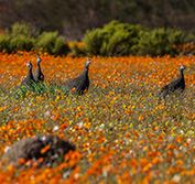 Holiday South Africa Cape Town Kalahari Whales Wildflowers Namaqualand