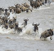 Flying Safari Serengeti Tanzania Wildebeest Migration Zanzibar