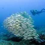 Photo Diving Sodwana Bay South Africa Dive Mozambique Reef Safari