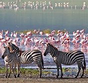 Serengeti Safari and Zanzibar Tanzania Tour Balloon Holiday Vacation