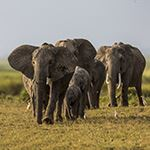 Mombasa Safari and Beach Holiday Tsavo Amboseli Taita Hills Big 5