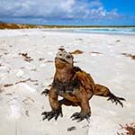Ecuador Holidays Quito Galapagos Islands Cruise Boats Ships Deals Offers