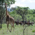 South Africa Horse Riding Holiday Safari Vacation Malaria Waterberg