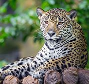 Pantanal Wildlife Holiday Brazil Jaguar Safari Porto Jofre Iguazu Rio