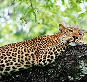 South Luangwa Safari Zambia Victoria Falls Zambian Safaris