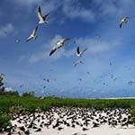 Bird Island Seychelles Sooty Tern Colony Praslin Birding Holiday