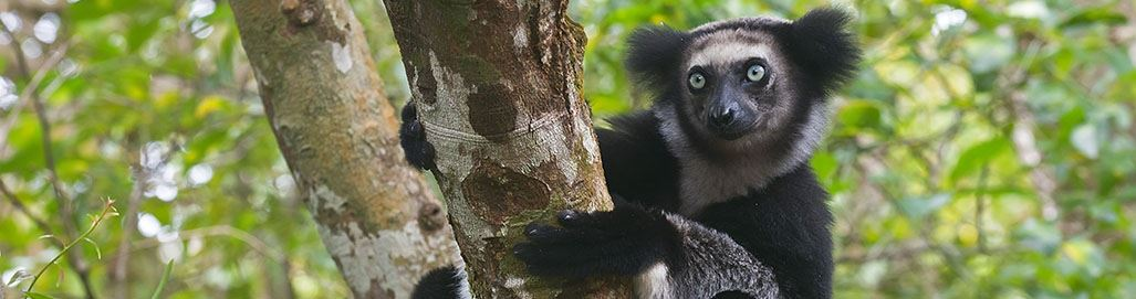 Madagascar Holidays Safari Tours Lemurs Wildlife Beaches Nosy Be St Marie