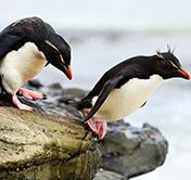Patagonia Chile Torres Whale Watching Penguin Birding Holiday Falklands
